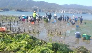 アサリ浜0411除去した網と浜の清掃