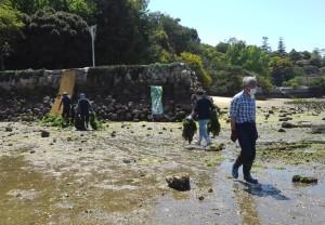 アサリ浜0425古い網の引き上げ